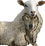 Beware of wolves in sheep's clothing among God's people (Matt.7:15; Ac.20:29).